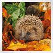 Woodland Trust notelets - woodland wildlife