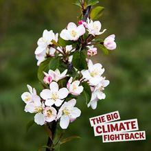 Crab Apple for the Big Climate Fightback