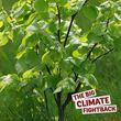 Hazel for the Big Climate Fightback