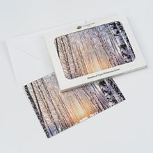 Snow and birch trees pack of eight Christmas cards
