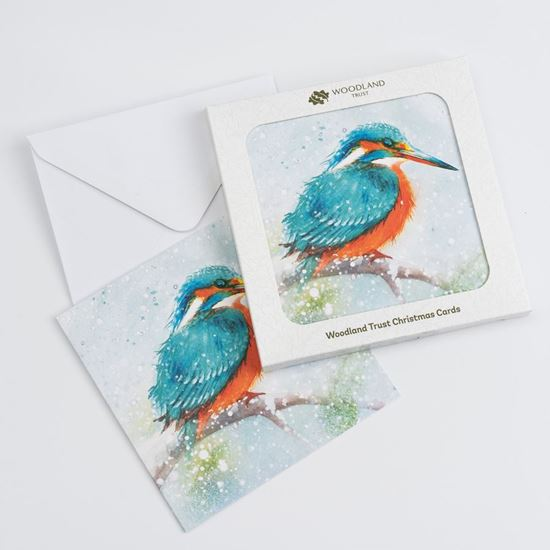 Kingfisher in snow design pack of eight Christmas cards