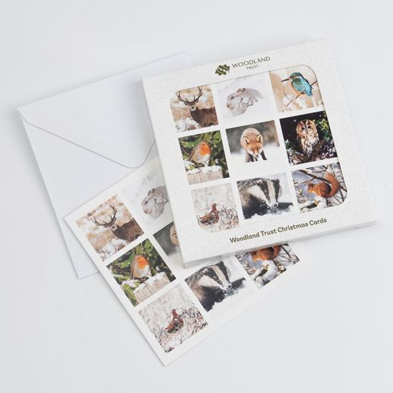Wildlife moments design pack of eight Christmas cards