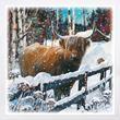 Highland cow Christmas cards